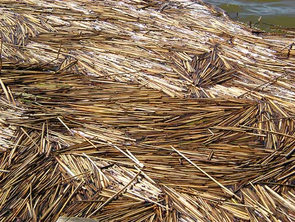 Reeds in pattern