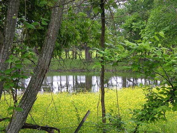 Full Pond in Spring
