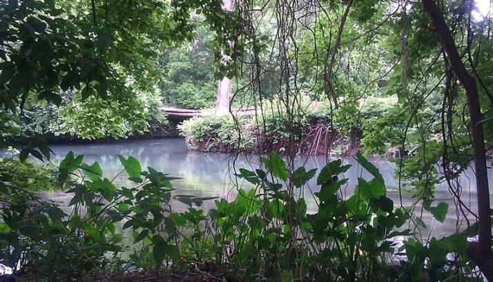 ThroughTheTrees - San Marcos River