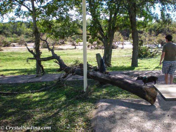 Misplaced Tree
